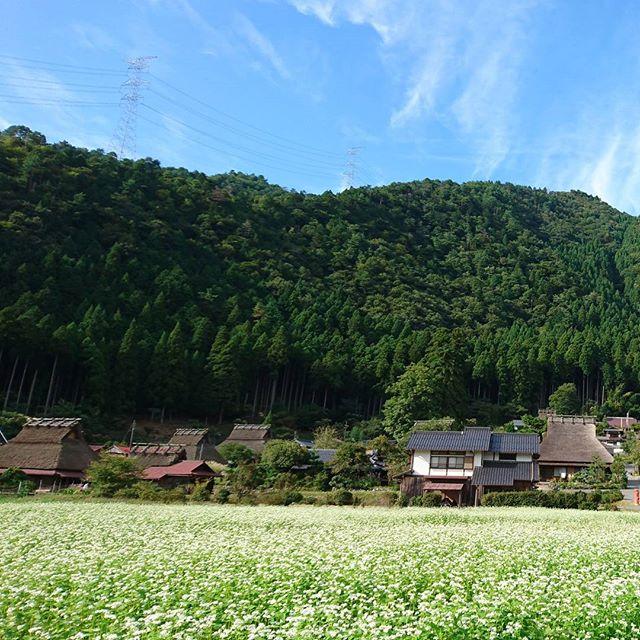 京都の北部、美山町かやぶきの里です。日本の原風景が広がります。ちょうど一面に蕎麦の花が満開でしたふるさとをテーマにした日本の歌がたくさんありますが、この景色に一番しっくりくるのはどれかしら?