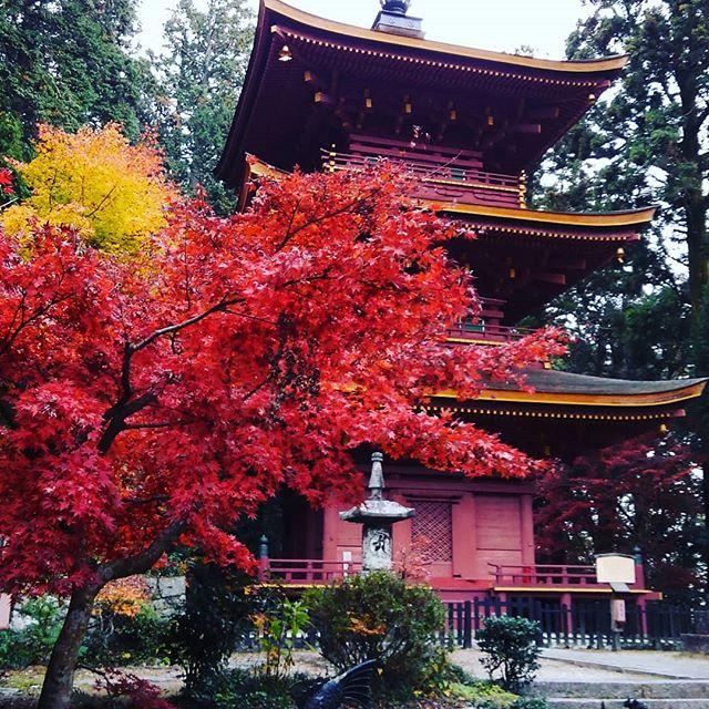 紅葉見納め丹波の高源寺